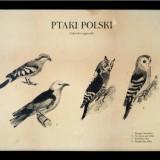 Ptaki Polski. Gatunki wymarłe