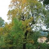Kula-Miedzianka, istalacja site specific, video